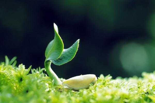 Tinh chất mầm đậu nành chứa những hoạt chất có lợi cho sức khỏe