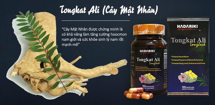 Cây mật nhân có trong thuốc bổ thận Tongkat Ali giúp tăng cường sức khỏe sinh lý nam