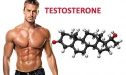 Testosterone là gì ? Cách bổ sung Testosterone hiệu quả
